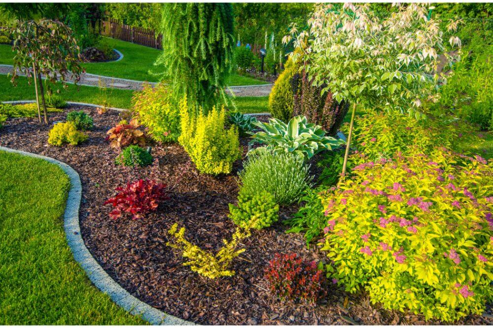 Best Landscaping Plants
