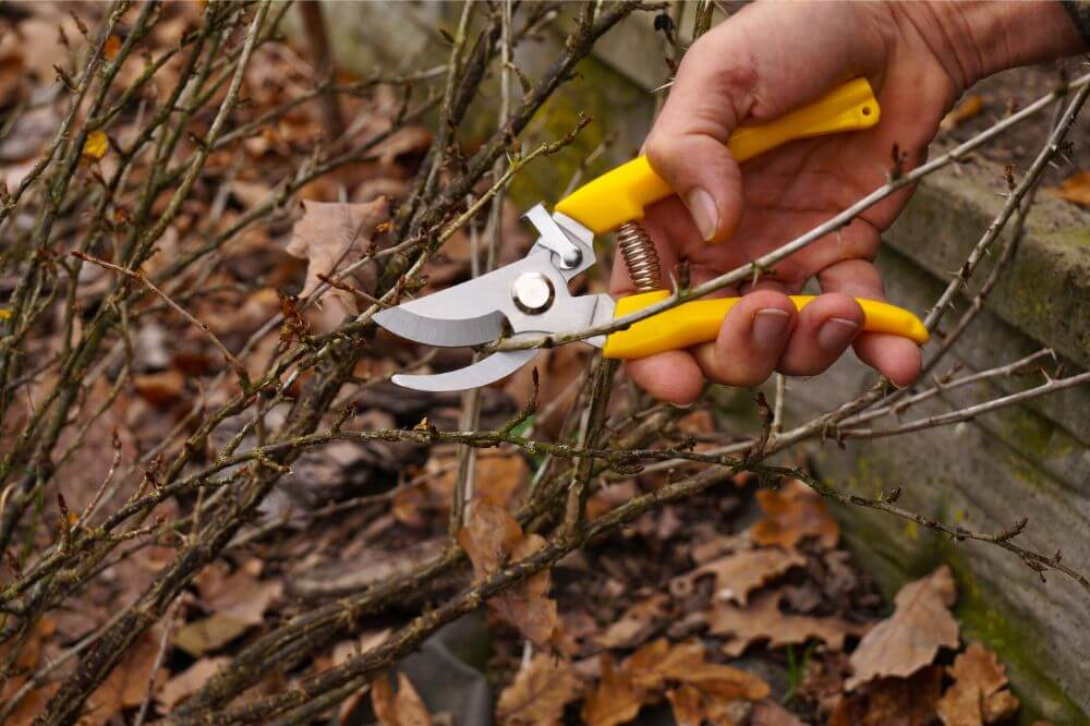 Power Drive Ratchet Anvil Hand Pruning Shears