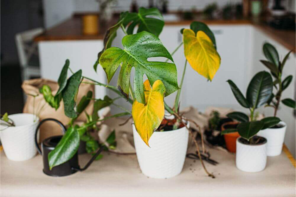 Signs That Your Plant is Unhealthy