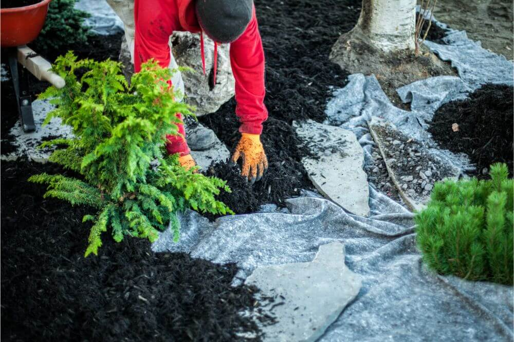 How To Lay Landscape Fabric Around Plants